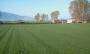 rulo çim, üretim
